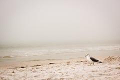Seagull na plaży Fotografia Stock