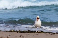 Seagull na plaży Obraz Stock