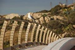 Seagull na poręczu Zdjęcia Stock
