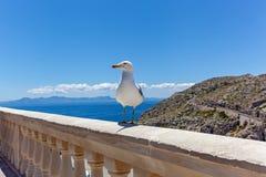 Seagull na poręczu Obraz Stock