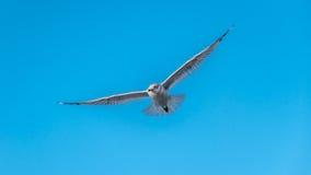 Seagull na punkt obserwacyjny Fotografia Stock