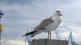 Seagull na schronienie słupie zbiory