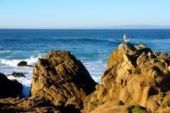Seagull na skałach z ubijanie kipielą zdjęcia stock