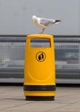 Seagull na starym żółtym koszu Fotografia Royalty Free