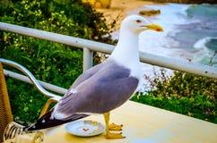 Seagull na stolik do kawy Zdjęcia Royalty Free