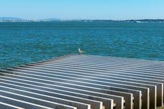 Seagull na Tagus rzece, Lisbon (Portugalia) Zdjęcia Royalty Free