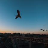 Seagull na tle Dom Luis Porto, przerzucam most przy półmrokiem Zdjęcia Royalty Free