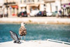 Seagull na tle królewski kanał w Sete, Languedoc Roussillon, Francja Odbitkowa przestrzeń dla teksta zdjęcia stock