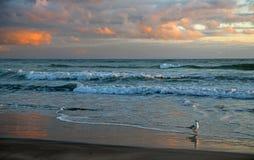Seagull na Waihi plaży przy wschodem słońca zdjęcie royalty free