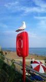 Seagull na życia boja Zdjęcie Royalty Free