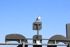 Seagull on a neon Stock Photography