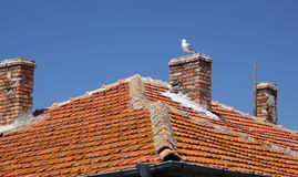 Seagull in Nesebar Royalty Free Stock Photos