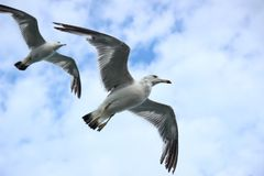 Seagull, New, Sea, Sky, Flight Stock Photos