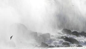 Seagull on Niagara Falls Canada side stock photos