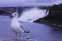 Seagull Niagara spadki Fotografia Stock