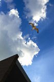 Seagull. A nice composition, including a seagull, a part of a modern building and clouds Stock Image