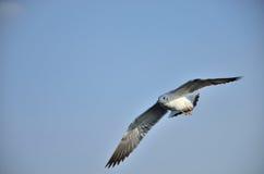 Seagull niebo Obrazy Royalty Free