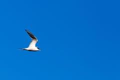 ενάντια στον μπλε seagull ουρα&nu Στοκ Εικόνα
