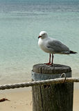 Seagull & Ocean stock photography