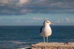 Seagull and the ocean Stock Photos