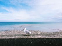 Seagull and the ocean. Shore blue gradient Royalty Free Stock Photography