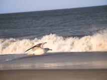 Seagull och bränning Arkivbilder