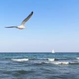 Seagull och ett skepp på havet Arkivbild