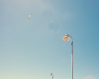 Seagull och lampa Arkivfoto