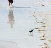 Seagull och man på stranden Royaltyfri Fotografi