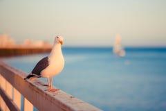 Seagull och solnedgång arkivfoton