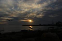 Seagull och solnedgång Fotografering för Bildbyråer