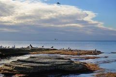 Seagull och solnedgång arkivbild
