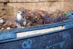Seagull od portu Essaouira Zdjęcie Stock