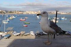 Seagull od Portugalia zdjęcia stock