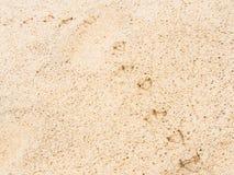 Seagull odcisków stopy piasek Zdjęcie Royalty Free