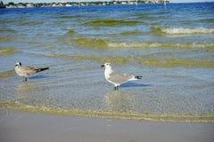 Seagull Odpoczywać Fotografia Stock