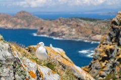 Seagull odpoczywa na uroczym słonecznym dniu obrazy stock