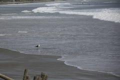 seagull odprowadzenie fotografia royalty free