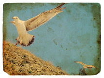 Seagull. Old postcard. Royalty Free Stock Photography