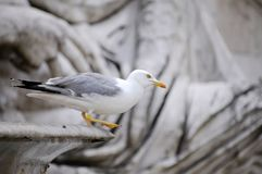 Seagull on the old sculpture royalty free stock photography
