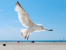 Free Seagull On The Beach Stock Image - 1051421