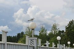 Seagull on one leg on a street lamp. Karlstad, Sweden. In the recreation Park Mariebergsskogen in Karlstad. Sweden, scandinavia, Europe. A seagull standing on Royalty Free Stock Image