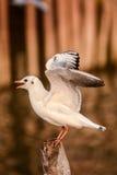 Seagull. One of lovely white seabirds stock image