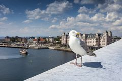 Seagull on opera house in Oslo, Norway Royalty Free Stock Photography