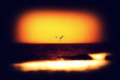 The Seagull Royalty Free Stock Photography