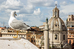 Seagull on the outlook of city Royalty Free Stock Images