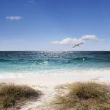 Seagull ovanför havet Royaltyfri Fotografi