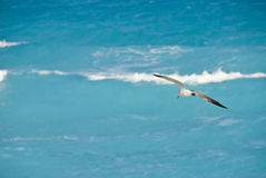 Seagull over blue ocean Royalty Free Stock Photography