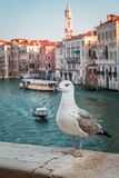 Seagull over the canal in Venice Stock Photography