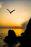 Seagull over coastline with hills Royalty Free Stock Image